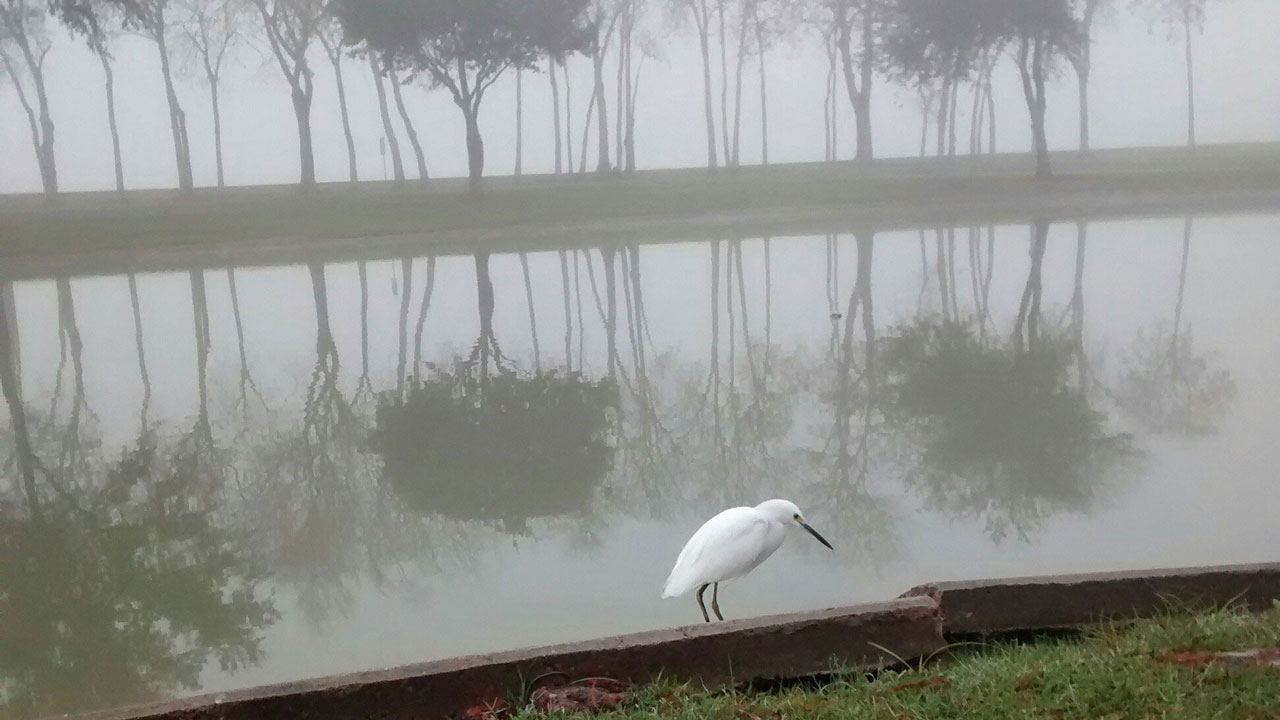 "<div class=""meta image-caption""><div class=""origin-logo origin-image none""><span>none</span></div><span class=""caption-text"">An abc13 viewer found a friend to share the fog with this morning at Arthur Storey Park in southwest Houston. (Photo Credit: DeAnne Giesy)</span></div>"