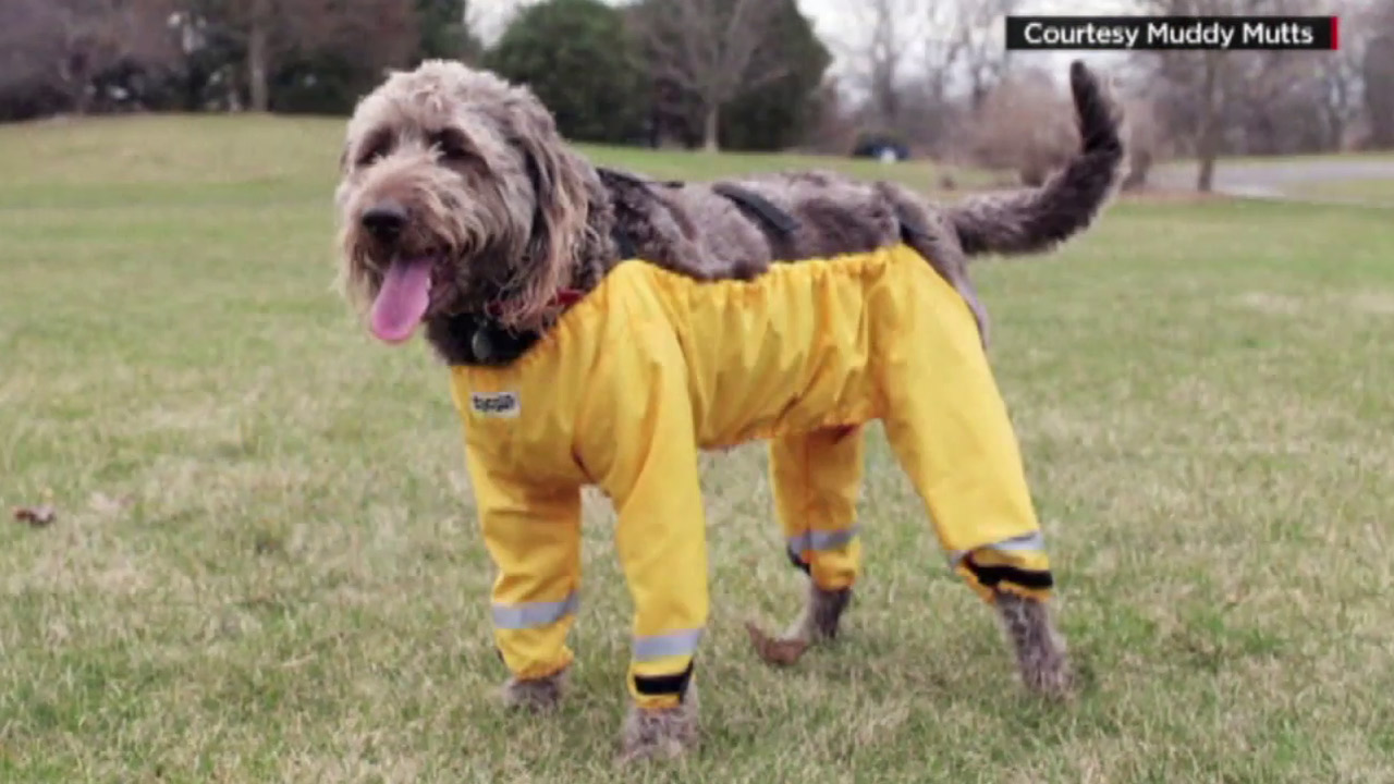 Show today dogs wearing pants exclusive photo