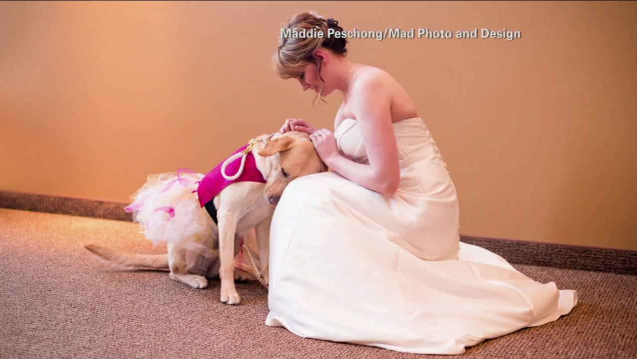 A service dog is seen calming a South Dakota bride before her wedding in an undated photo.
