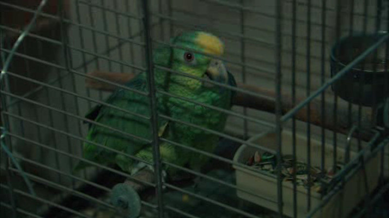 200 rare and exotic birds found in New Jersey clothing store
