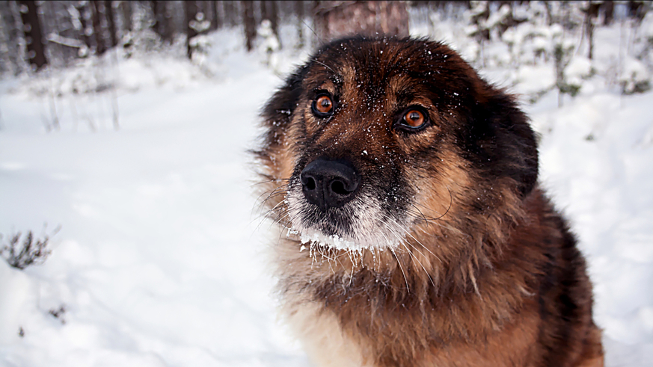 Even furry pets shouldn't be exposed to the sub-freezing temperatures for long.