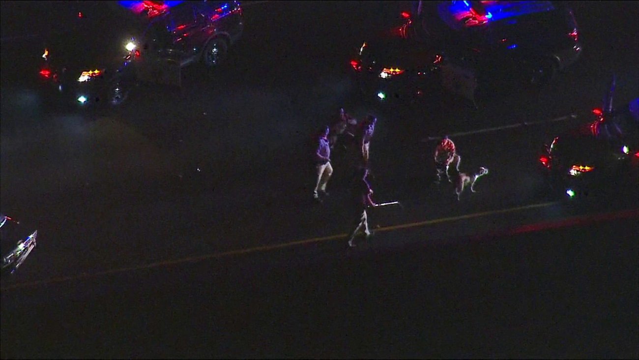 The California Highway Patrol was able to gather multiple dogs after a police chase on the 710 Freeway on Monday, Jan. 18, 2016.