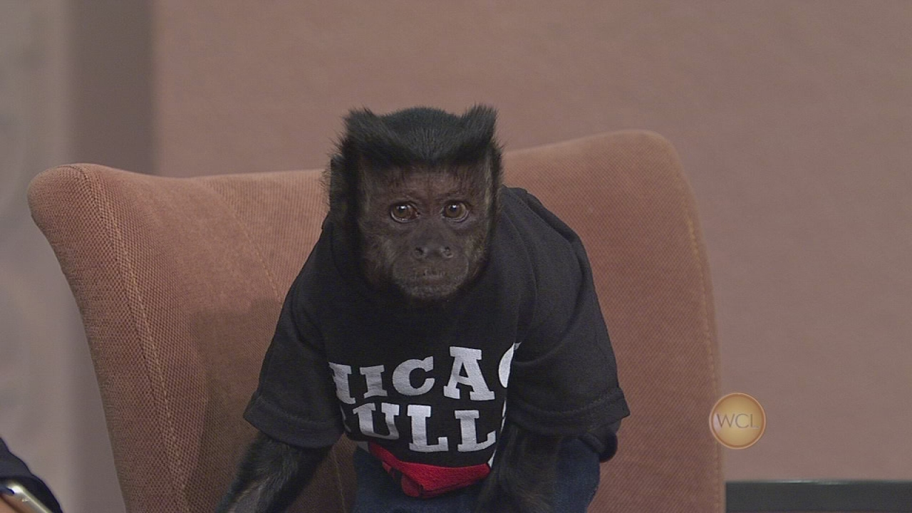 crystal the monkey filmography