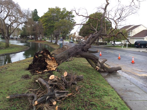 "<div class=""meta image-caption""><div class=""origin-logo origin-image none""><span>none</span></div><span class=""caption-text"">A Bay Area storm brought down a tree in Foster City, Calif. on Friday, January 22, 2016. (KGO-TV)</span></div>"