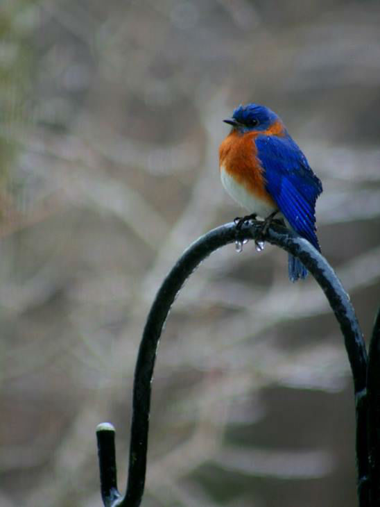 "<div class=""meta image-caption""><div class=""origin-logo origin-image none""><span>none</span></div><span class=""caption-text"">A bluebird in Knightdale.</span></div>"
