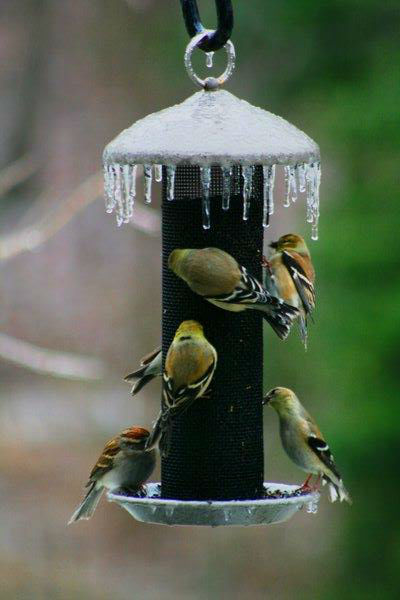 "<div class=""meta image-caption""><div class=""origin-logo origin-image none""><span>none</span></div><span class=""caption-text"">Birds gather to feed in Knightdale.</span></div>"