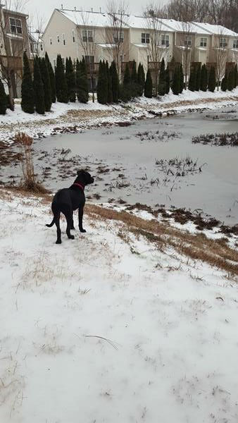 "<div class=""meta image-caption""><div class=""origin-logo origin-image none""><span>none</span></div><span class=""caption-text"">Tootsie, a 4-month-old pit bull enjoys the snow in north Raleigh.</span></div>"