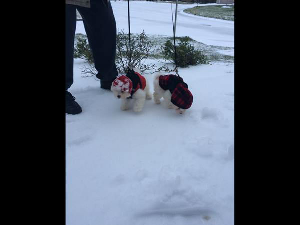 "<div class=""meta image-caption""><div class=""origin-logo origin-image none""><span>none</span></div><span class=""caption-text"">In Durham, Vinny and Teddy, 11-week-old brothers, experience snow on the ground for the first time!</span></div>"