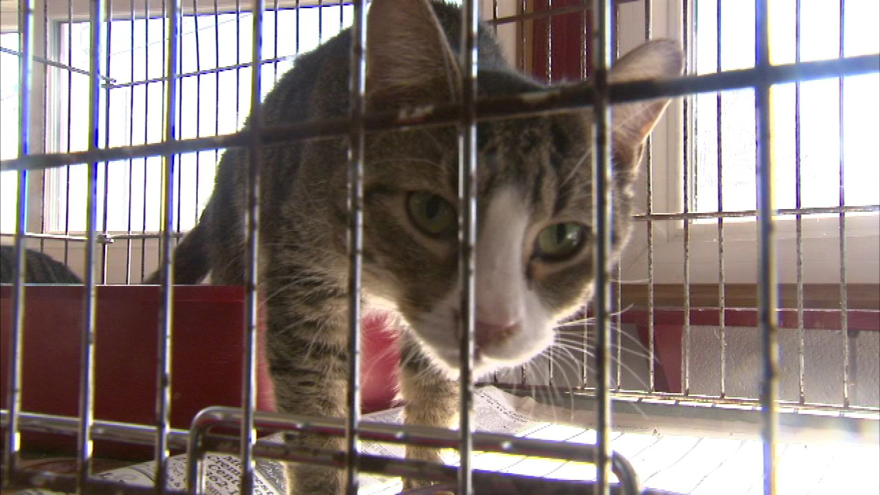 Pets rescued from Lake Station home need care | abc7chicago com