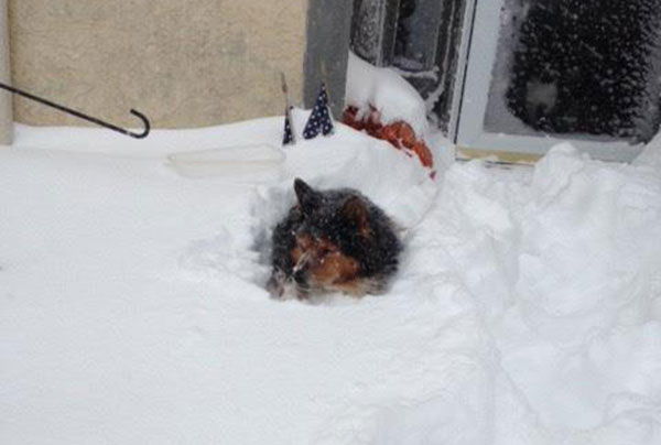"""<div class=""""meta image-caption""""><div class=""""origin-logo origin-image none""""><span>none</span></div><span class=""""caption-text"""">Sandy is just cooling in the snow. (Action News Viewer)</span></div>"""