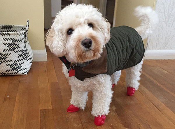 """<div class=""""meta image-caption""""><div class=""""origin-logo origin-image none""""><span>none</span></div><span class=""""caption-text"""">Brody is ready in his coat and boots. (Action News Viewer)</span></div>"""