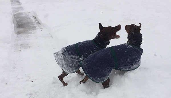 """<div class=""""meta image-caption""""><div class=""""origin-logo origin-image none""""><span>none</span></div><span class=""""caption-text"""">One of these dogs may be more excited than the other about the snow. (Action News Viewer)</span></div>"""