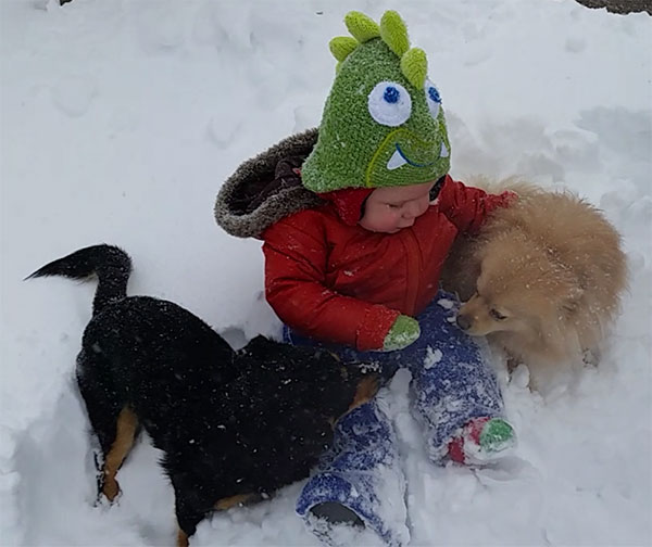 """<div class=""""meta image-caption""""><div class=""""origin-logo origin-image none""""><span>none</span></div><span class=""""caption-text"""">This little one is enjoying the snow with his favorite pups. (Brittanee)</span></div>"""