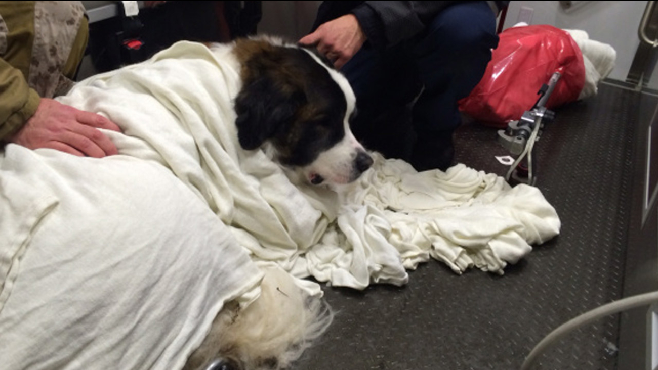 Milo is shown wrapped in a blanket in the Fairfax County medic unit after he fell into a frozen lake in Virginia.