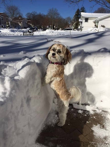 """<div class=""""meta image-caption""""><div class=""""origin-logo origin-image wabc""""><span>WABC</span></div><span class=""""caption-text"""">Tess is checking out the snow! Blizzard of 2016 (Amy Hirschhorn)</span></div>"""