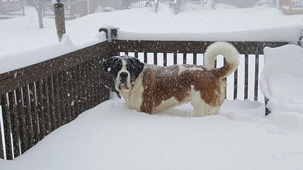 """<div class=""""meta image-caption""""><div class=""""origin-logo origin-image none""""><span>none</span></div><span class=""""caption-text"""">This 4-year-old is looking pretty regal in the snow. (Action News Viewer)</span></div>"""