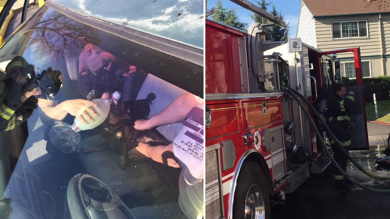 Crews rescued a dog and his owner from an apartment building fire in San Jose, Calif. on Tuesday, January 26, 2016.