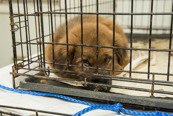 <div class='meta'><div class='origin-logo' data-origin='none'></div><span class='caption-text' data-credit='Photo/ASPCA'>Some of the animals rescued from a Hoke County animal shelter Wednesday, Jan. 27.</span></div>