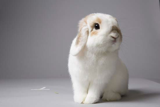 meet cinnabun houston bunny wins contest to be the new face of