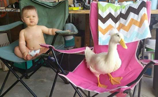 <div class='meta'><div class='origin-logo' data-origin='none'></div><span class='caption-text' data-credit='Photo/Mr. T and Bee'>Little boy and his duck are best friends.</span></div>