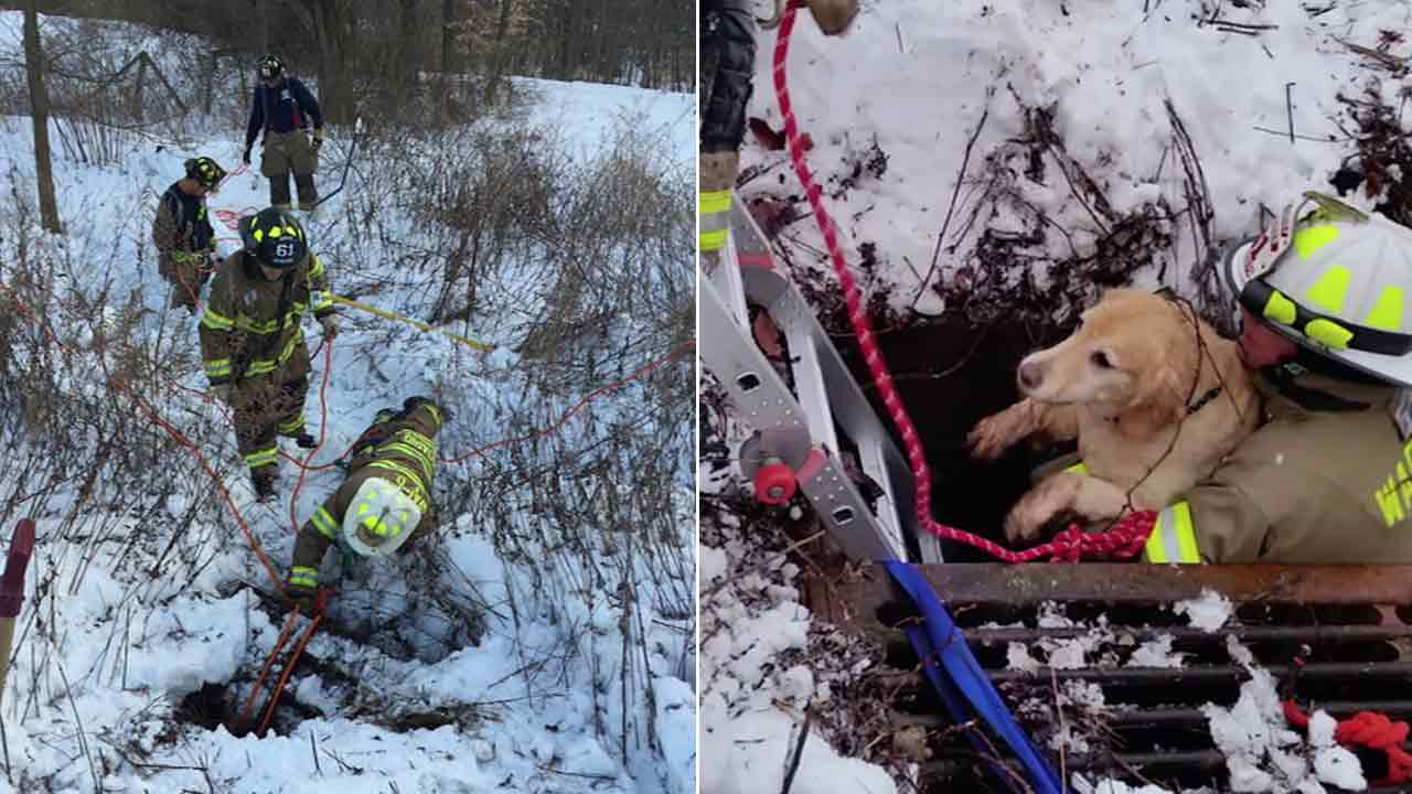 New Jersey firefighters seen rescuing a Golden Retriever that fell 8 feet into a storm drain.
