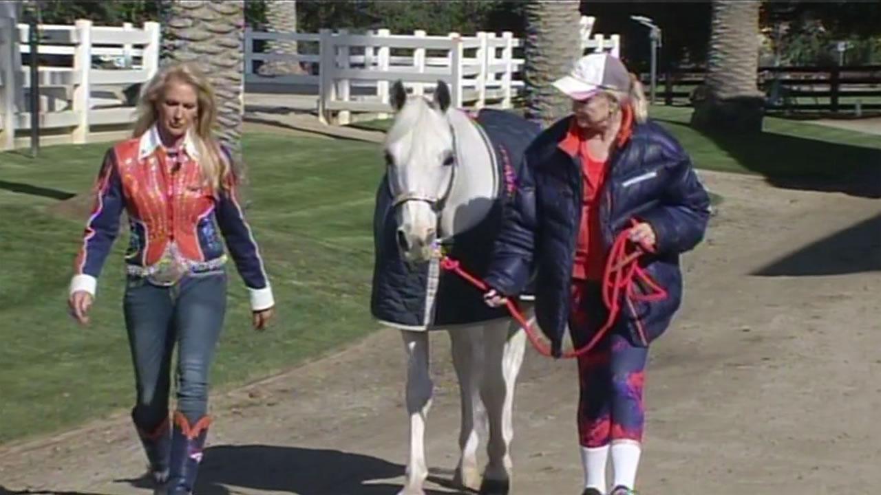 The Denver Broncos' mascot Thunder at the Stanford University Equestrian Center in Palo Alto, Calif. Feb. 4, 2016.