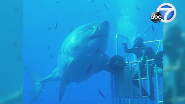 Largest Great White Shark Ever Caught In The Pacific Ocean