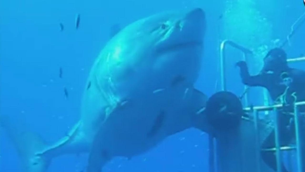 Shark in Mexico