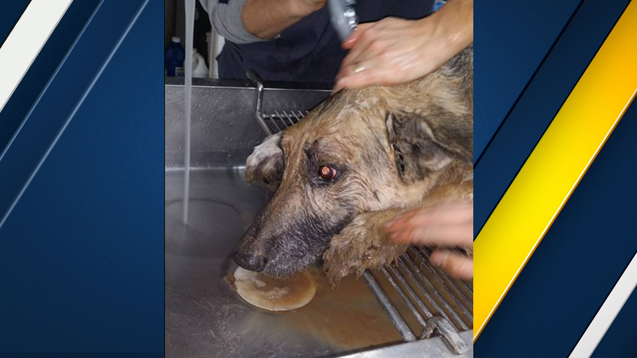Maverick, a German shepherd who was rescued from a sinkhole, gets the mud rinsed off him by rescue personnel in Missouri.