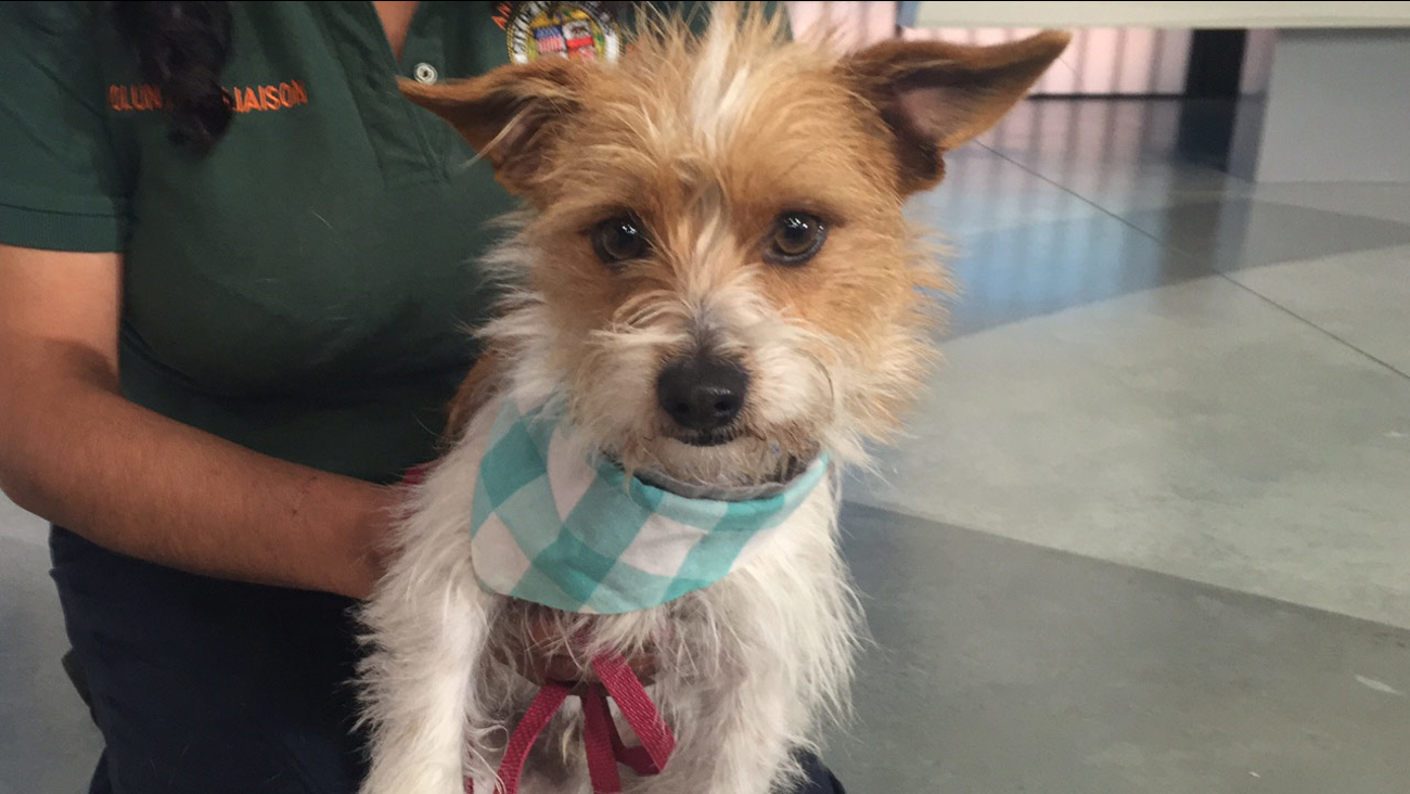 Our Pet of the Week on Tuesday, Feb. 9, is a 1-year-old male terrier mix named Sparky. Please give him a good home!