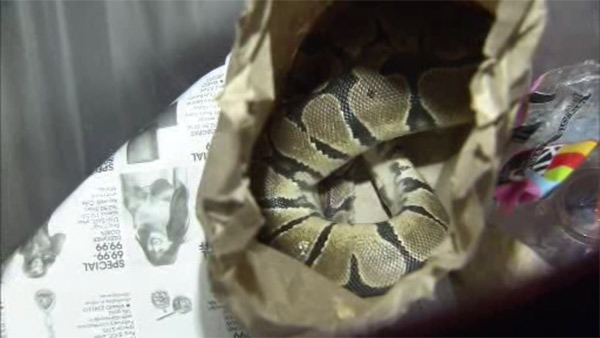 Snake found in trash can at SEPTA train station