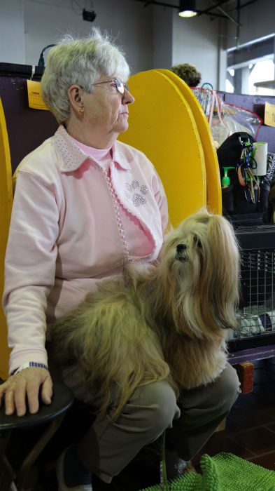 "<div class=""meta image-caption""><div class=""origin-logo origin-image none""><span>none</span></div><span class=""caption-text"">Some of the many dogs participating in the 140th Westminster Kennel Club Dog Show in New York City.</span></div>"