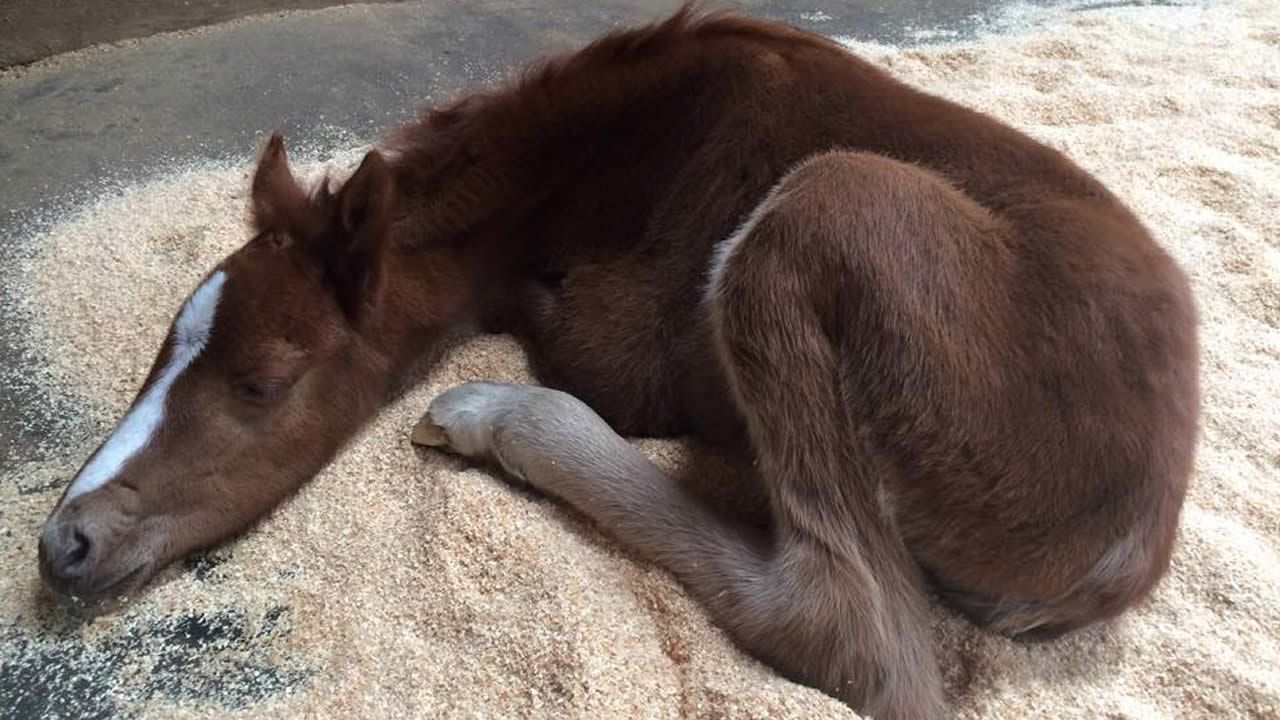 Baby Horse Rescued From Ravine In Fremont Being Cared For By Tri City Animal Shelter Abc7 San Francisco