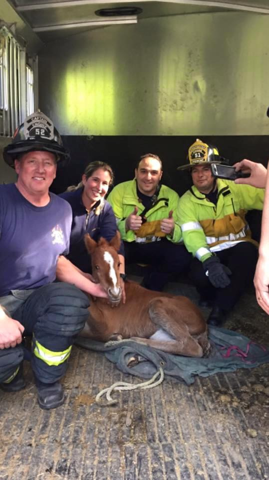 """<div class=""""meta image-caption""""><div class=""""origin-logo origin-image none""""><span>none</span></div><span class=""""caption-text"""">A baby horse named Valentine was rescued from a ravine in Fremont, Calif. on Sunday, February 14, 2016. (Fremont Police Department/Facebook)</span></div>"""