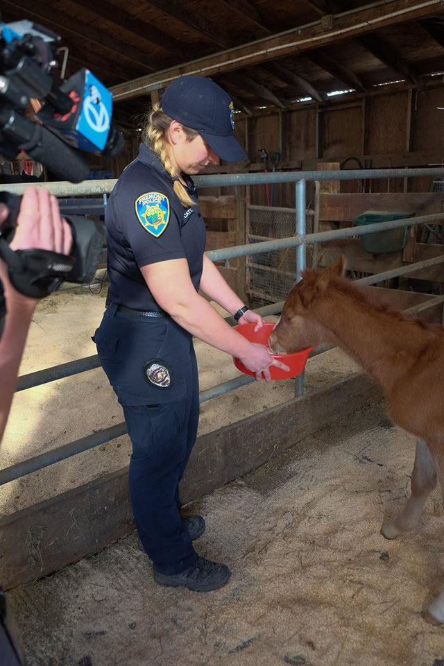 """<div class=""""meta image-caption""""><div class=""""origin-logo origin-image none""""><span>none</span></div><span class=""""caption-text"""">A baby horse named Valentine was rescued from a ravine in Fremont, Calif. on Sunday, February 14, 2016. (KGO-TV/Wayne Freedman)</span></div>"""