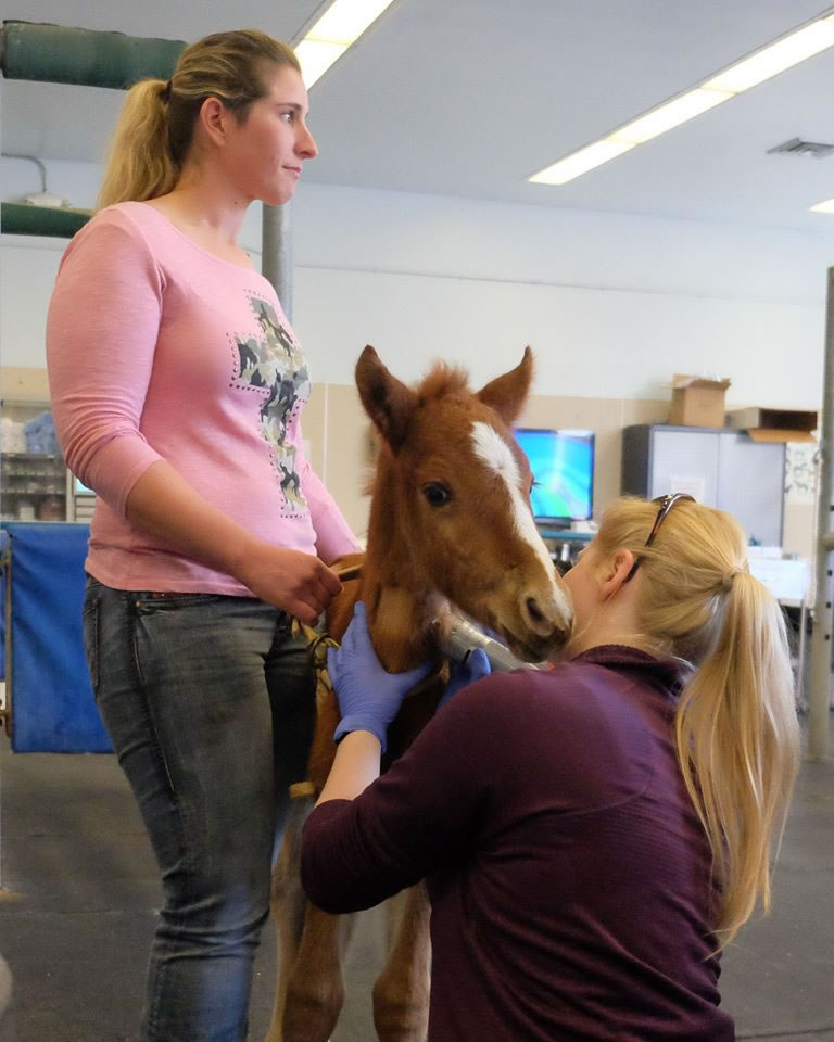 """<div class=""""meta image-caption""""><div class=""""origin-logo origin-image none""""><span>none</span></div><span class=""""caption-text"""">A baby horse named Valentine that was rescued from a ravine in Fremont, Calif. is seen in Davis, Calif. on Tuesday, February 16, 2016. (KGO-TV/Wayne Freedman)</span></div>"""