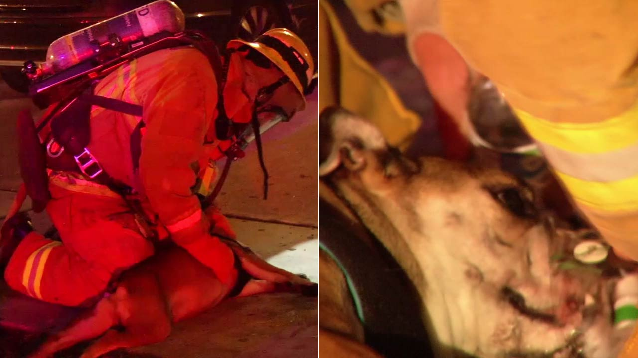 Firefighters aid a dog that was pulled from a burning apartment building in Koreatown on Thursday, Feb. 18, 2106.