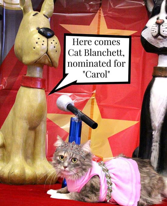 <div class='meta'><div class='origin-logo' data-origin='none'></div><span class='caption-text' data-credit='Sugar Land Animal Services'>Here is our first furry star, Cat Blanchett! She's wearing an amazing pink gown and beautiful jewels.You can call 281-275-ADOG for adoption</span></div>