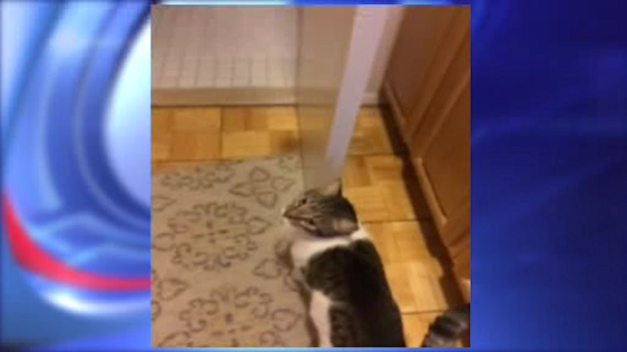 Cat recovering after being tortured on Upper East Side