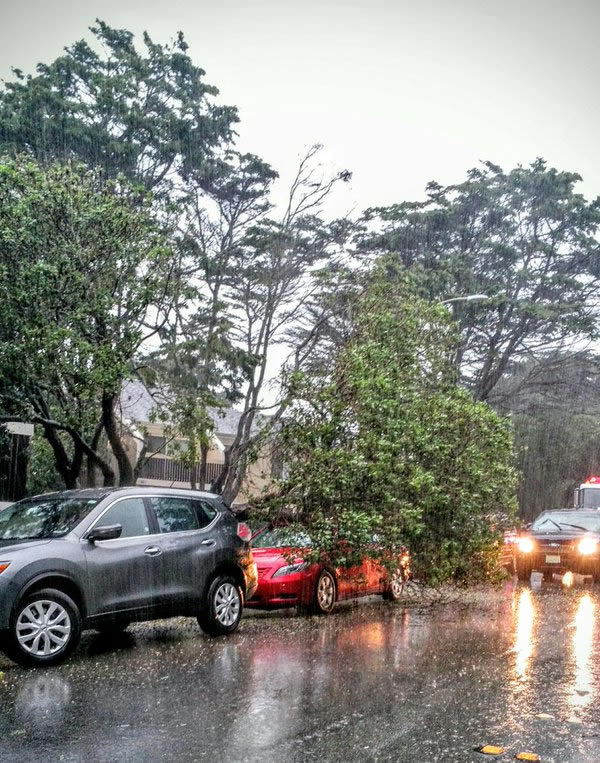 "<div class=""meta image-caption""><div class=""origin-logo origin-image none""><span>none</span></div><span class=""caption-text"">Powerful winds bring down a tree in Pacifica, Calif., on Saturday, March 5, 2016. (Photo submitted to KGO-TV by @mobnola/Twitter)</span></div>"