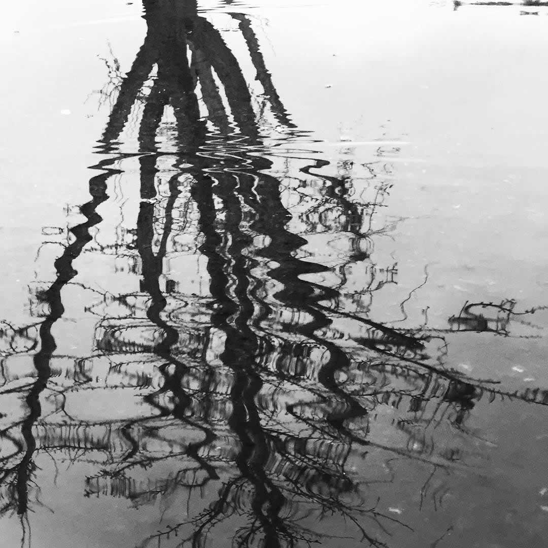 "<div class=""meta image-caption""><div class=""origin-logo origin-image none""><span>none</span></div><span class=""caption-text"">A reflection of a tree in a flooded sidewalk in Sonoma County on Saturday, March 5, 2016. (Photo submitted to KGO-TV by @gustavoarizmendi/Instagram)</span></div>"