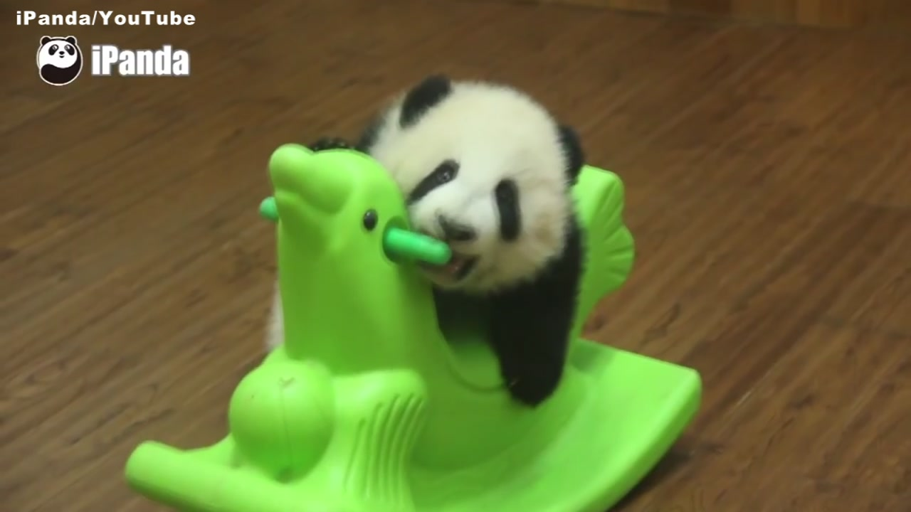 Video Baby Panda In China Tries To Ride Toy Rocking Horse Abc7 San Francisco