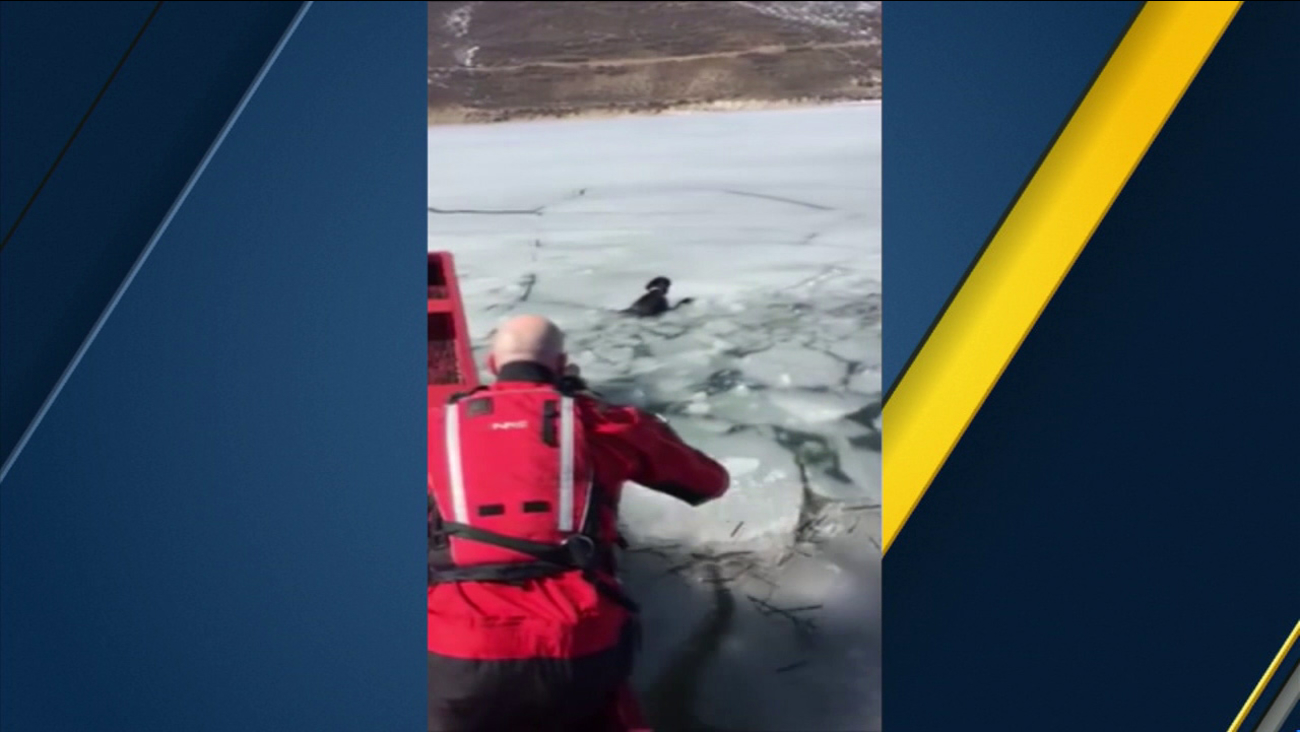 Volunteers with the Utah County Sheriff's Office rescued a dog from icy waters at the Deer Creek Reservoir on Friday, March 4, 2016.