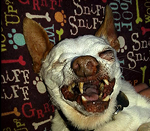 "<div class=""meta image-caption""><div class=""origin-logo origin-image ""><span></span></div><span class=""caption-text"">Willie Bean Walker is one of the top dogs at this year's World's Ugliest Dog Contest at the Sonoma-Marin Fair, being held Friday June 20th in Petaluma, California.</span></div>"