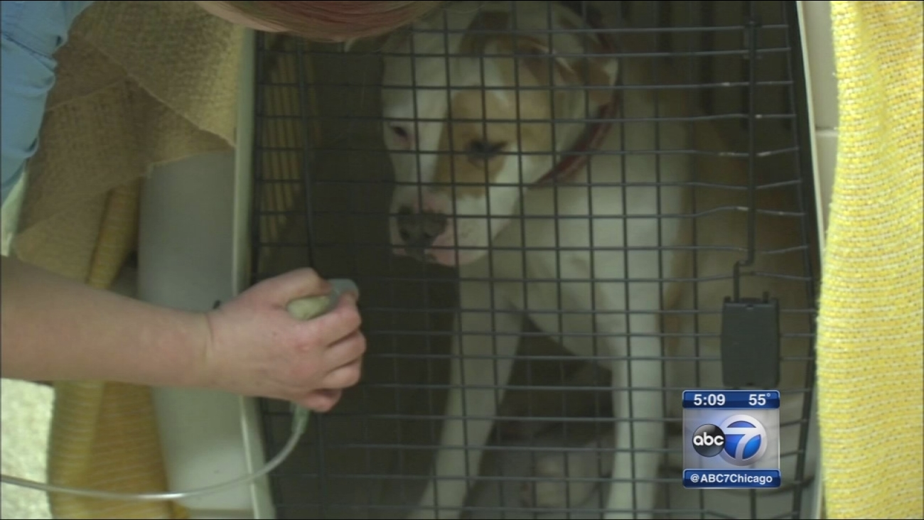 Indiana animal shelter fights virus outbreak