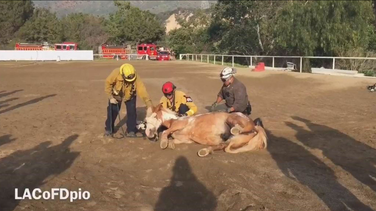 Firefighters look over a horse that fell down a ravine in Sylmar on Saturday, March 19, 2016.