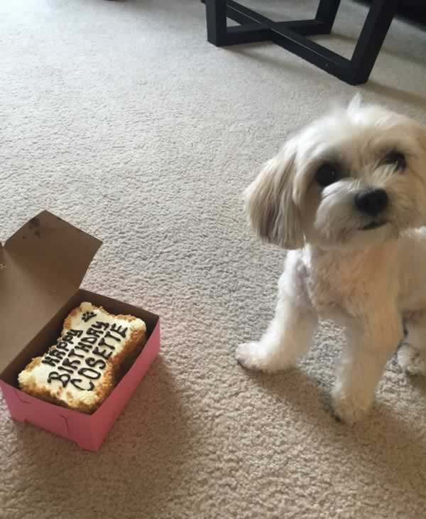 """<div class=""""meta image-caption""""><div class=""""origin-logo origin-image none""""><span>none</span></div><span class=""""caption-text"""">Meet Cosette! In honor of National Puppy Day, ABC7 is getting in the National Puppy Day spirit by featuring photos sent in by our viewers and our news team using #PuppiesOn7. (Photo submitted to KGO-TV by becca_beth22/Twitter)</span></div>"""