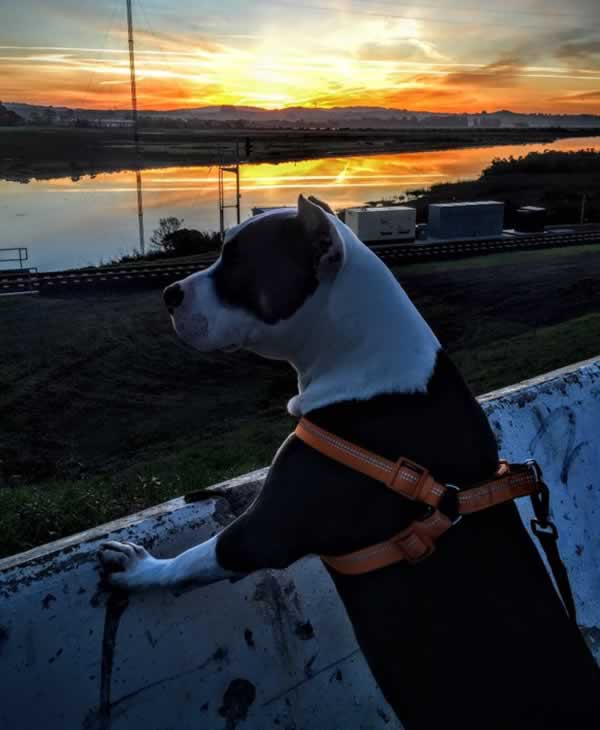 """<div class=""""meta image-caption""""><div class=""""origin-logo origin-image none""""><span>none</span></div><span class=""""caption-text"""">In honor of National Puppy Day, ABC7 is getting in the National Puppy Day spirit by featuring photos sent in by our viewers and our news team using #PuppiesOn7. (Photo submitted to KGO-TV by jakeman517/Twitter)</span></div>"""