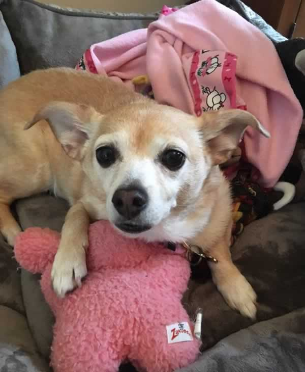 """<div class=""""meta image-caption""""><div class=""""origin-logo origin-image none""""><span>none</span></div><span class=""""caption-text"""">Meet Dori! In honor of National Puppy Day, ABC7 is getting in the National Puppy Day spirit by featuring photos sent in by our viewers and our news team using #PuppiesOn7. (Photo submitted to KGO-TV by jeffeugley/Twitter)</span></div>"""