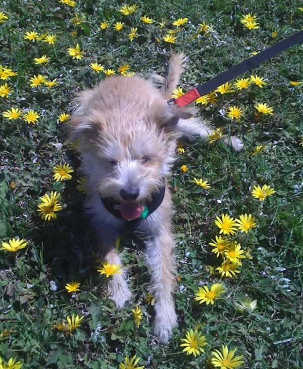 """<div class=""""meta image-caption""""><div class=""""origin-logo origin-image none""""><span>none</span></div><span class=""""caption-text"""">Meet Alfie! In honor of National Puppy Day, ABC7 is getting in the National Puppy Day spirit by featuring photos sent in by our viewers and our news team using #PuppiesOn7. (Photo submitted to KGO-TV by ideadiva/Twitter)</span></div>"""